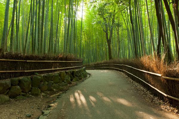 Tra i sentieri della foresta di Bamboo