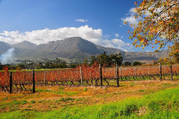 Brindisi in Sudafrica