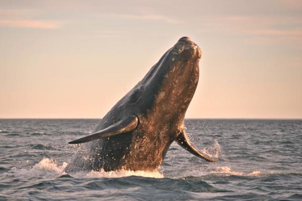 Hermanus...e lo spettacolo delle balene