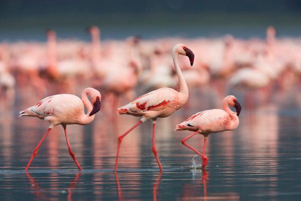 L'isola rosa
