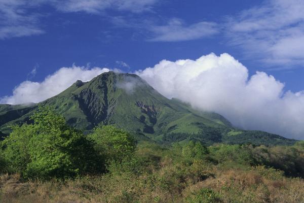 Martinica verde