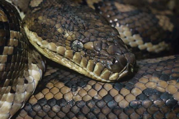 La leggenda del serpente Wanambi
