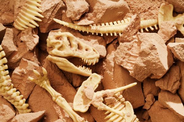 Un salto... a 100 milioni di anni fa!