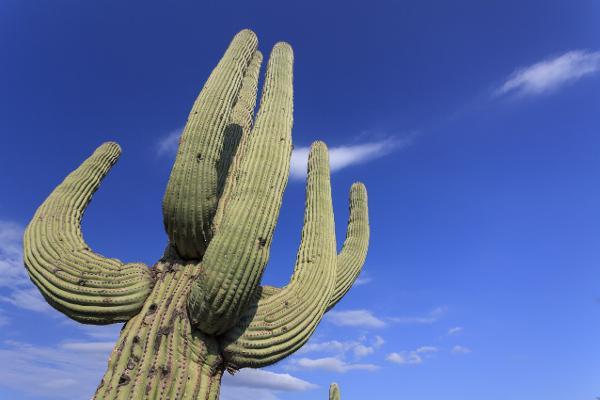 Rosso deserto e verde cactus
