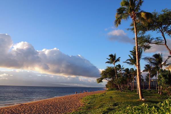 L'essenza delle Hawaii