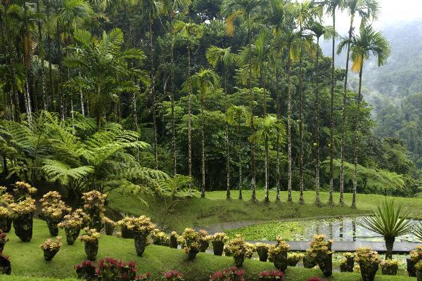 Profumo di Martinica