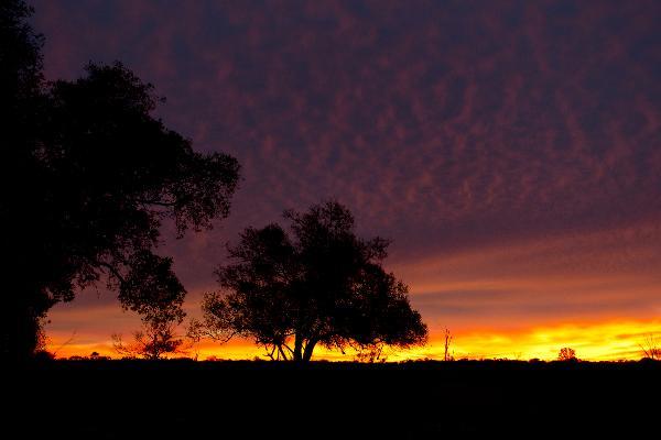 Buongiorno Australia!