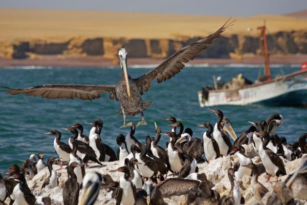 Le Galapagos del Perù