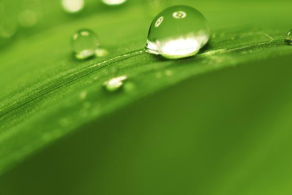 Colora di verde la tua giornata!