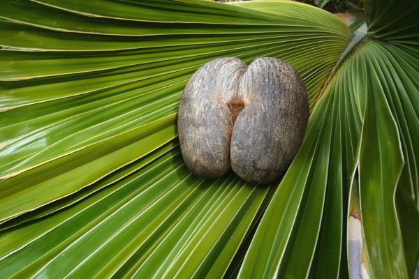 Un frutto ose'