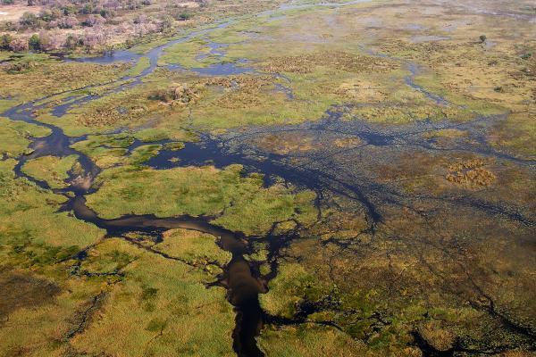 In volo sul Chobe