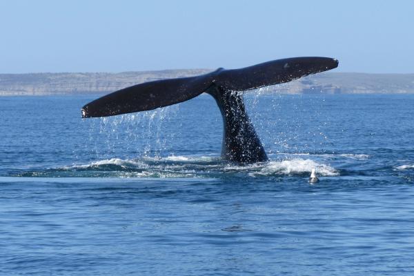 Scatti fotografici e pigrizie marine