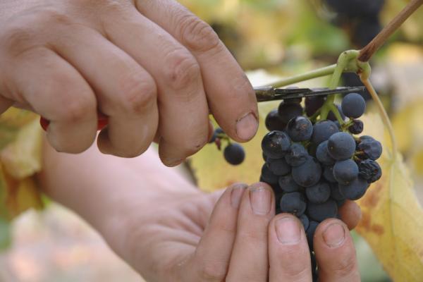A lezione.. di vino!