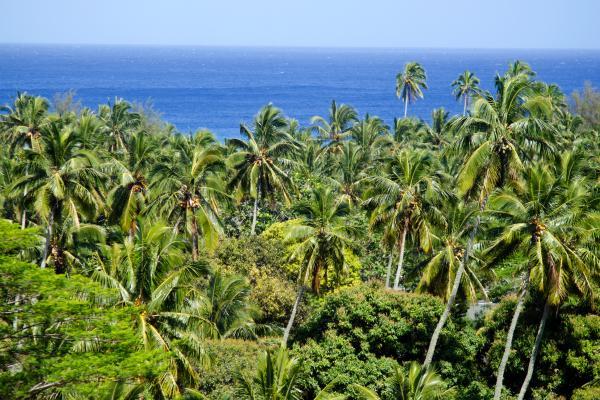 I verdi segreti di Rarotonga