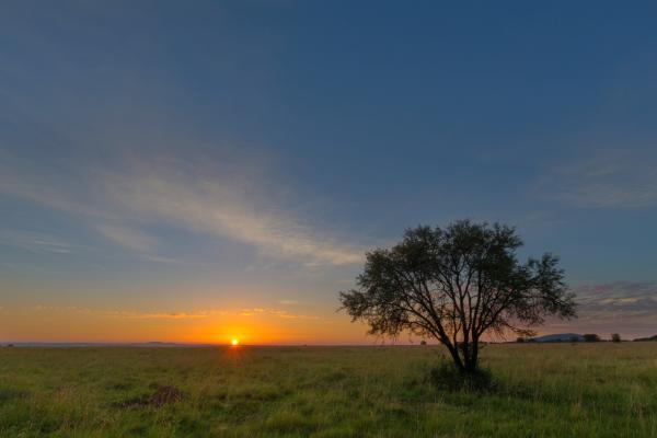 Un'alba sul veld