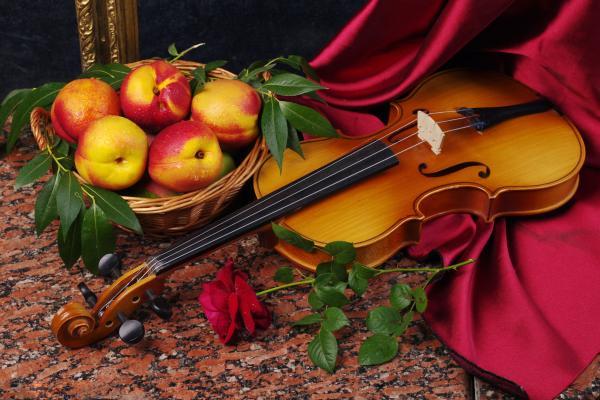 Concerti e cucina gourmet in fattoria