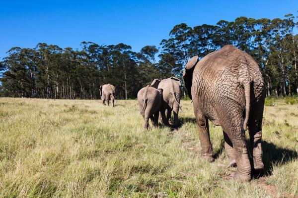 A casa degli elefanti