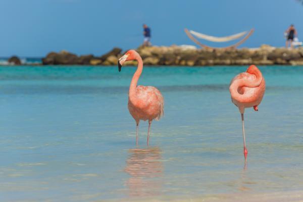 Gli abitanti di Aruba