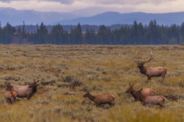 A scuola di biologia in Wyoming